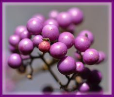 The Color Purple by FrankAndCarySTOCK