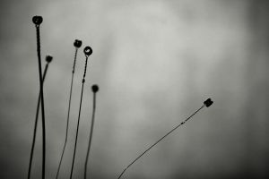 ..like antennas to heaven I by blackminded