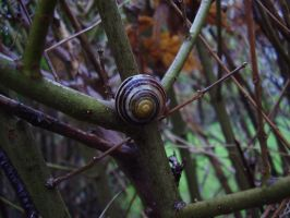 Snail At The Crossroads by Pentacle5