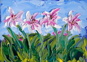 Magenta and white lilies by davepuls