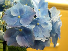 Light Blue Flowers by Michies-Photographyy