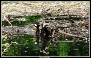 Birdie at The Waters Edge by Arawn-Photography