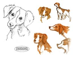 Spaniel by LaTaupinette