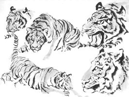 Tiger Ink Sketches by Ryuuji