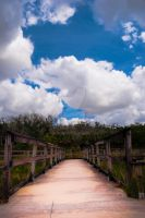 Everglades Walkway by Halient