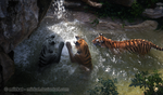 Playing Tigers by Miirkat