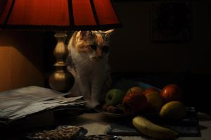 le chat by juliepond