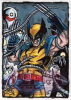 Wolverine Sketch Card by tonyperna