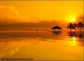 Golden Sunset by mode-aleef-77