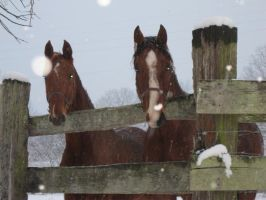 Horses in the snow by Amf624