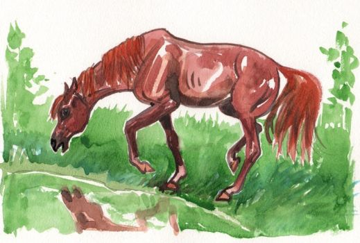 Horse afraid of water by DonnaBarr