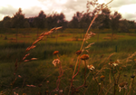 Soft Field by tjhiphop
