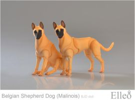 Malinois 06 by leo3dmodels