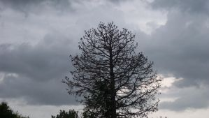 Cloudy Tree by Sir-Max671