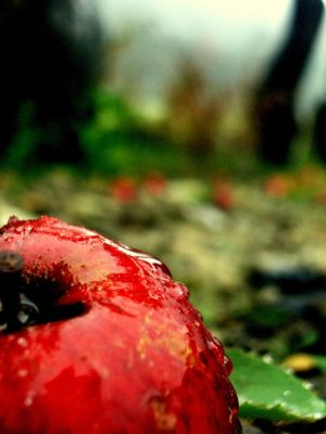 Red apple by NineWhileNine - ` Her TeLden Kar���k G�zel Avatarlar ...