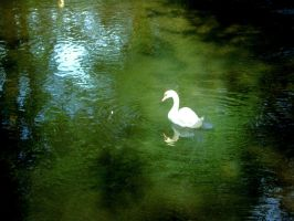 Swan down the mill. by Luduie