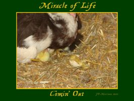 MIracle of Life 1 by dragonpyper