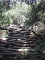 Nature - Forest Stairs 2 by Stock-gallery