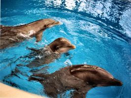 3 Dolphins by Aprilvirgo
