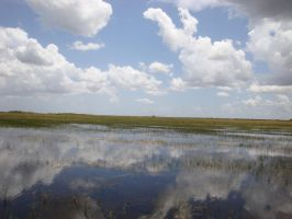 Day 9: the everglades by Fan-Evelyne