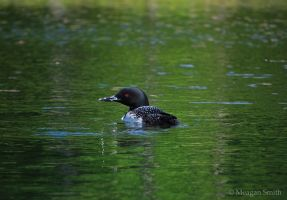 Common Loon by Pagan-Inspiration
