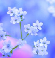 Little Wish of Spring by Birthstone