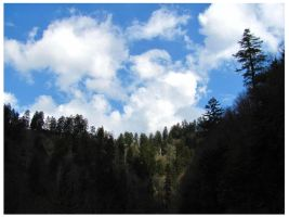 Evergreens and Cloudy Skies - The Smoky Mountains by CrystalMarineGallery