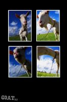 Collage with goat by MurphyL6