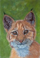 Cub in pastels by Sarahharas07