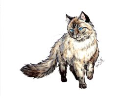 Animal Draw - Cat Radgoll by DarkTiger-ex