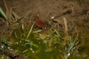 Spring Peeper by MiaLeePhotography