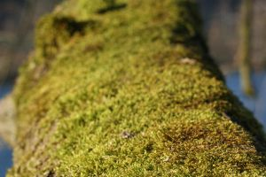 Moss 2 by Stichflamme-Stock