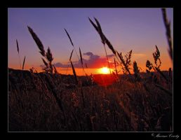 Sunset in a field by Discomax
