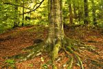 Tree Roots 16926316 by StockProject1