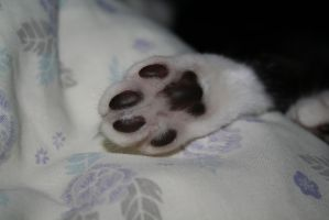 Talk to the Paw... by tammyins