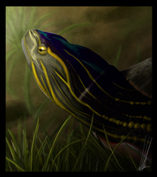 The Painted Turtle Story by shorty-antics-27