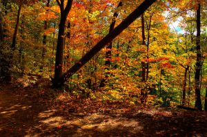 Fall Colours 2012 by Qels