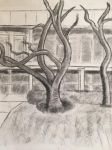 Sketched Tree by Nicktoons4ever