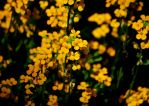 Yellow from nature by Michawolf13