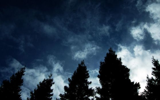 Clouds and Trees by Leitmotif