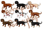 FP - Dachshund Image Bank by Rainneydrop