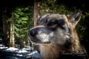 Le Temps du Loup by GamesOfLight
