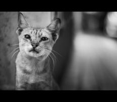 Urban Cats - 22 by MARX77