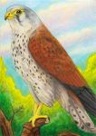 April ACEO Soulwithin465 by Astrocat