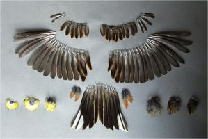 Feather collection - Emberiza citrinella by Federnarr