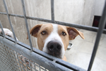 East Valley Animal Shelter 21 by Deliquesce-Flux