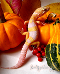 Halloween Gecko by Toxic-Muffins-Studio