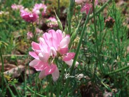 pretty pink by GreenSlOw