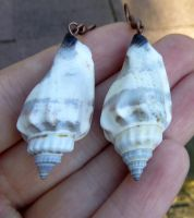 Conch Shell Earrings by Lost-in-the-day