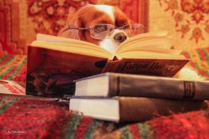 Reader by AnZhi0369